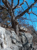 Tree growing on rock ledge